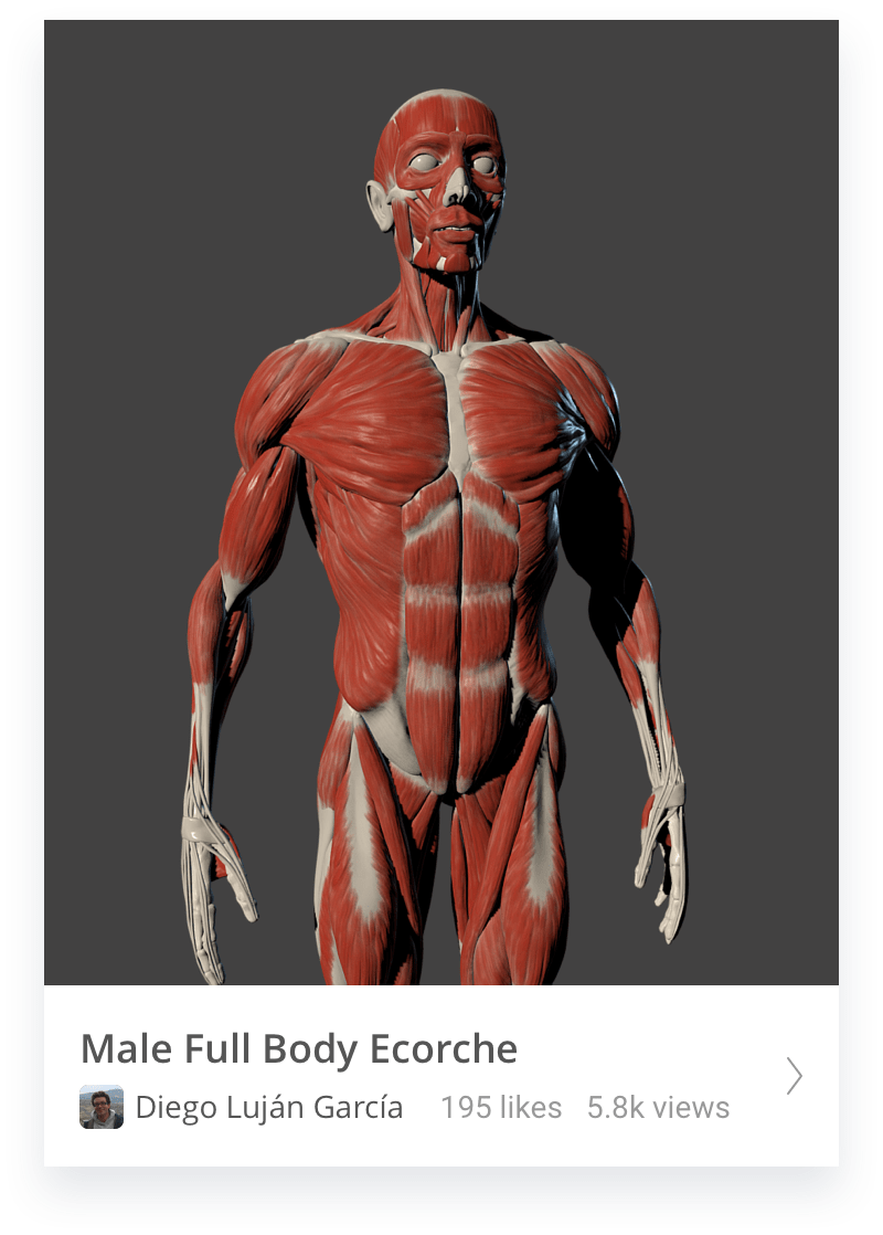 Male body ecorche thumbnail